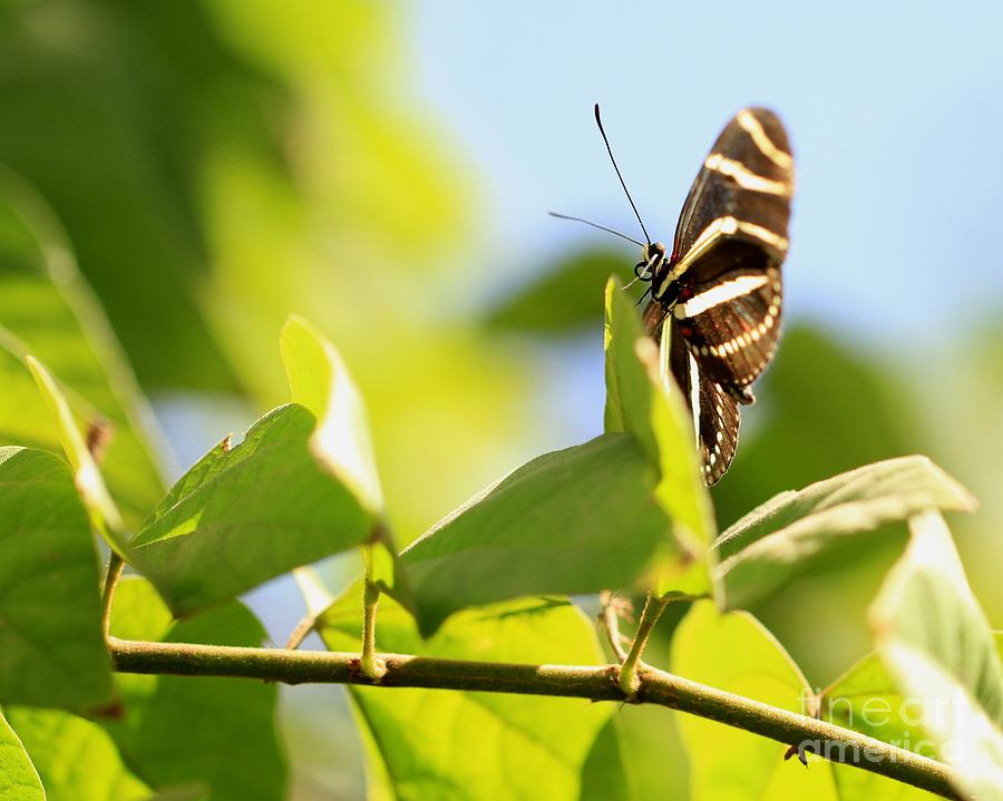 Arizona Photograph - Butterfly by Ashley M Conger