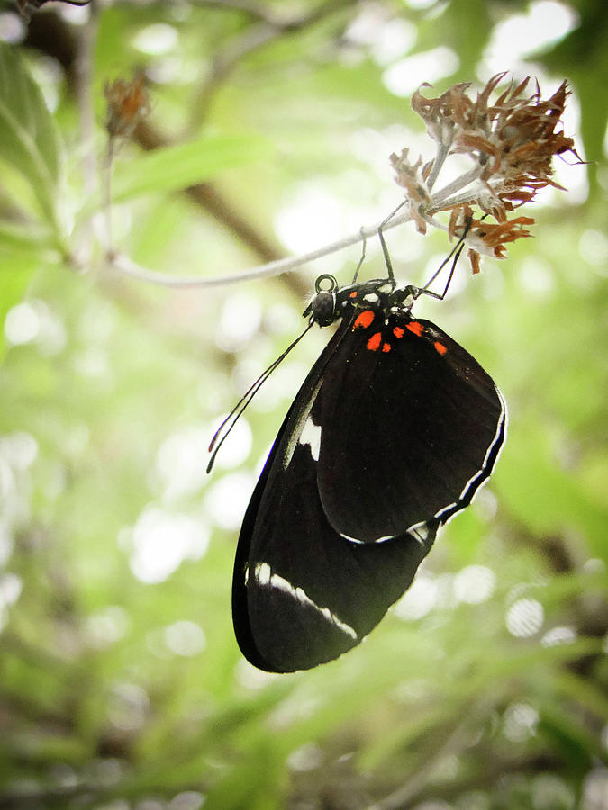 Butterfly At St. Louis Zoo Photograph by Photograph By Abigail King