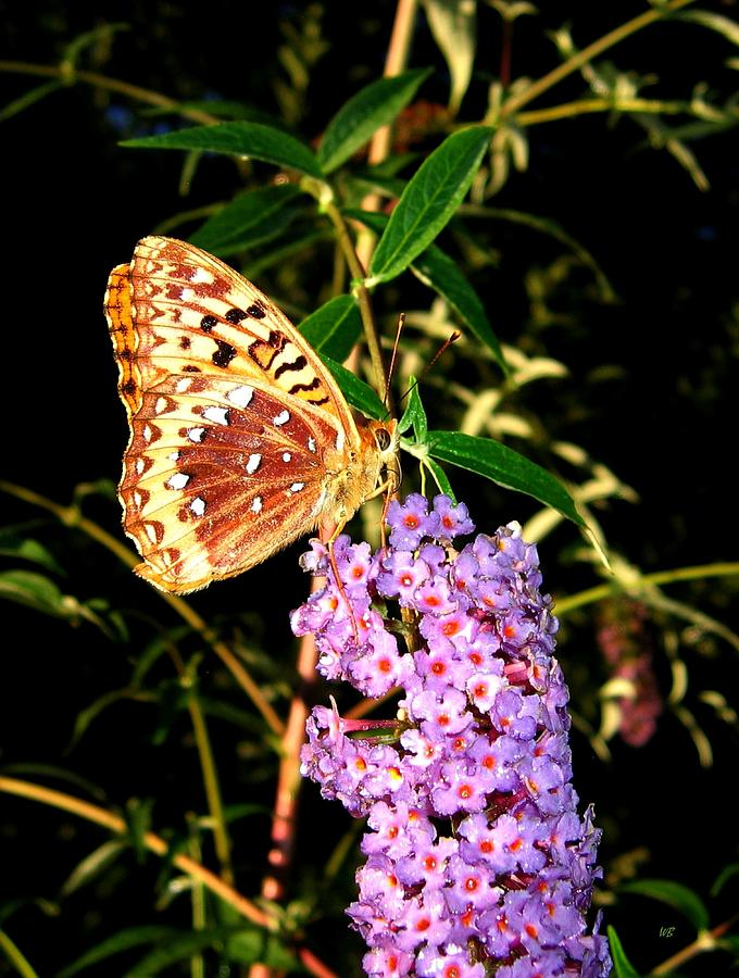 Butterfly Photograph - Butterfly Banquet 2 by Will Borden
