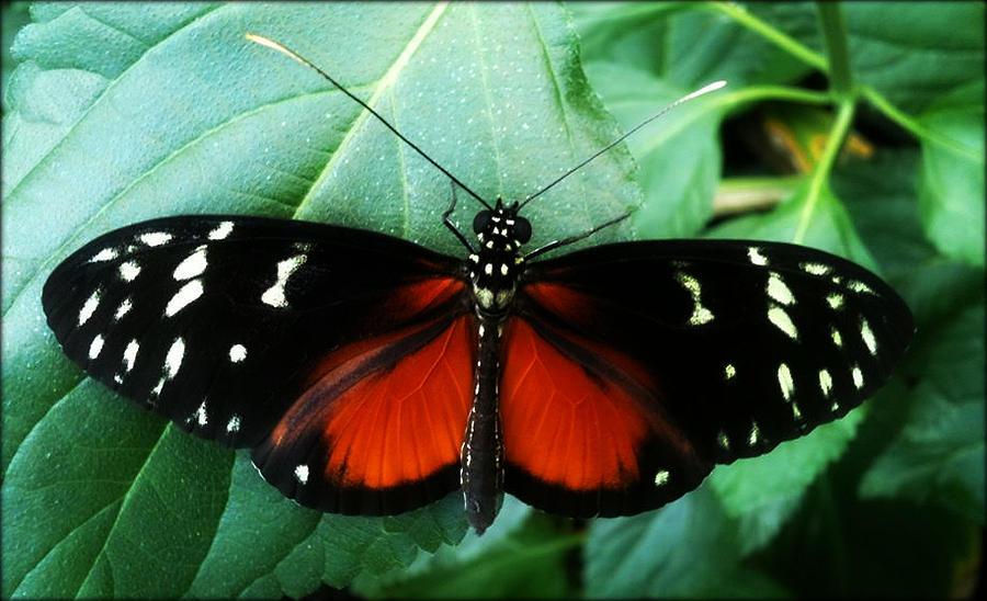 Butterfly Photograph - Butterfly Beauty by Beril Sirmacek