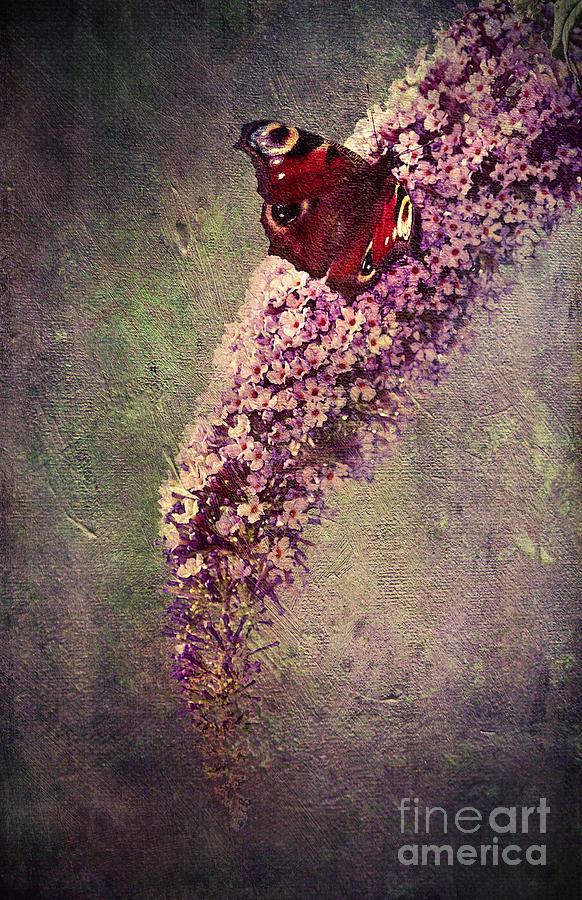 Anniversary Drawing - Butterfly Bush by Svetlana Sewell