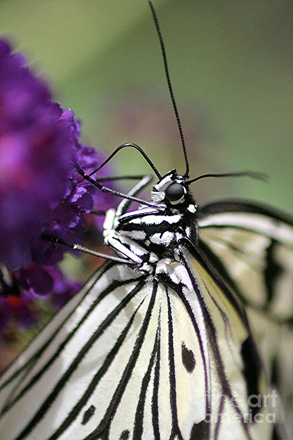 Butterfly Close Up Photograph