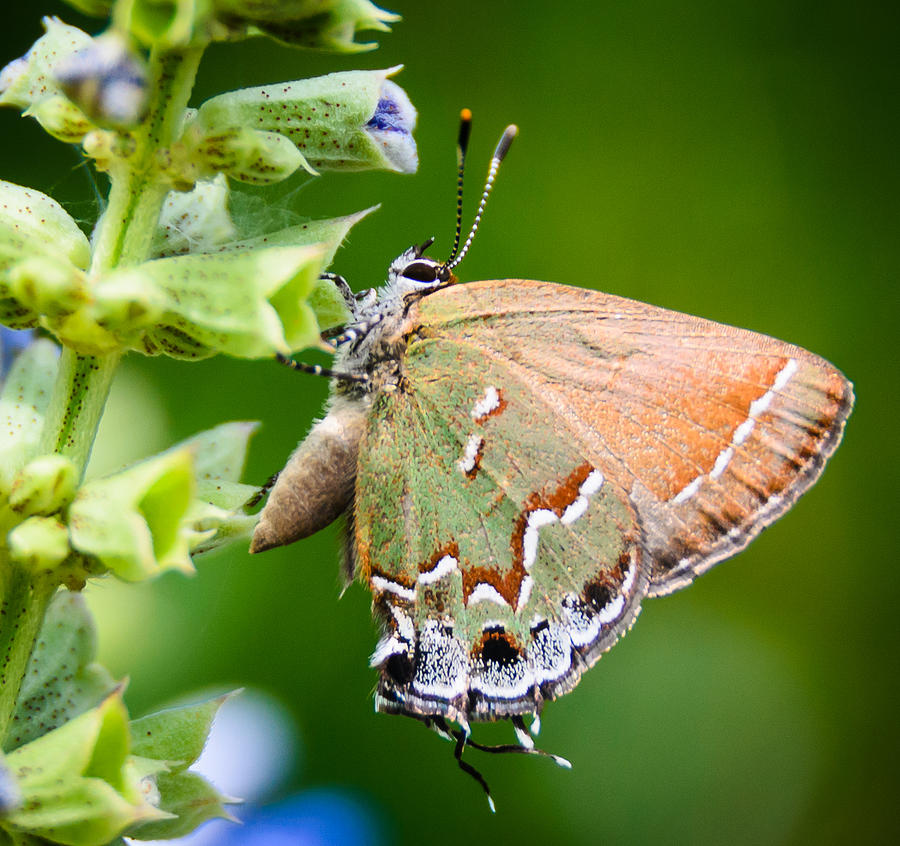 Butterfly Photograph - Butterfly by Don L Williams