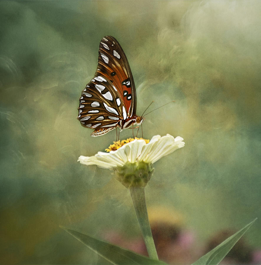 Butterfly Photograph - Butterfly Dreams by Kim Hojnacki