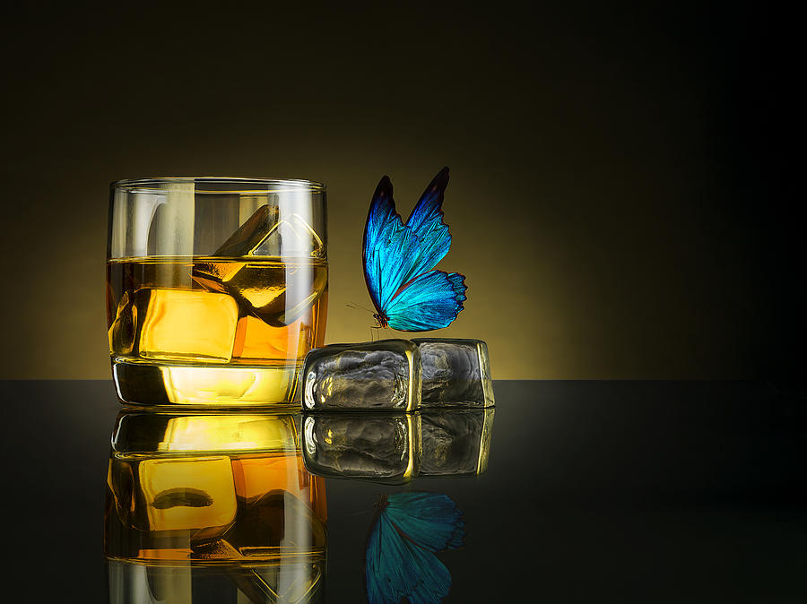 Butterfly Photograph - Butterfly Drink by Jackson Carvalho