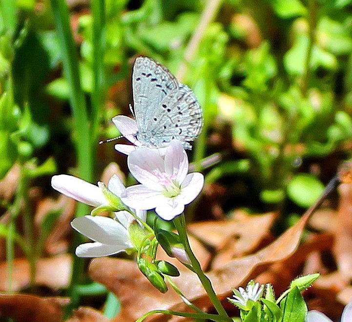 Butterfly Photograph - Butterfly Flower by Candice Trimble