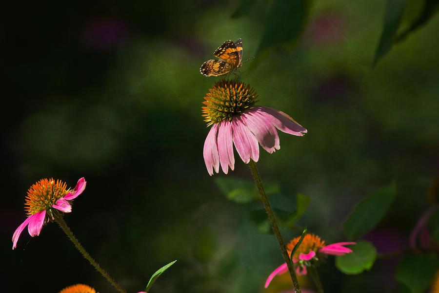 Butterfly Photograph - Butterfly Garden by Kim Henderson