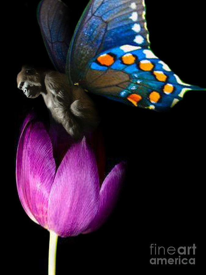 Digital Art - Butterfly-gorilla by Soumya Bouchachi