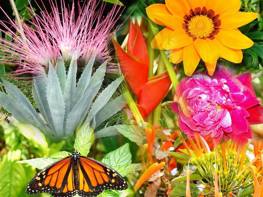 Seminole Photograph - Butterfly In The Flowers by Van Ness