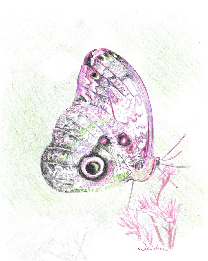 Butterfly Drawing - Butterfly by Kathy Weidner