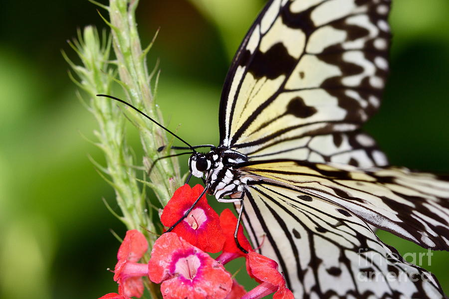 Butterfly Photograph - Butterfly Kisses by Pamela Gail Torres