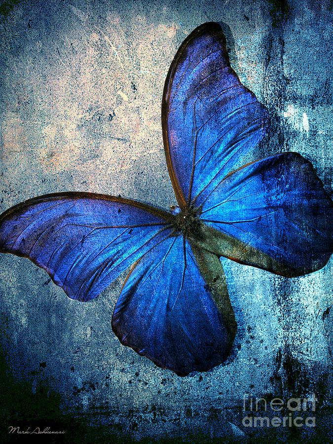 Butterfly Photograph - Butterfly by Mark Ashkenazi