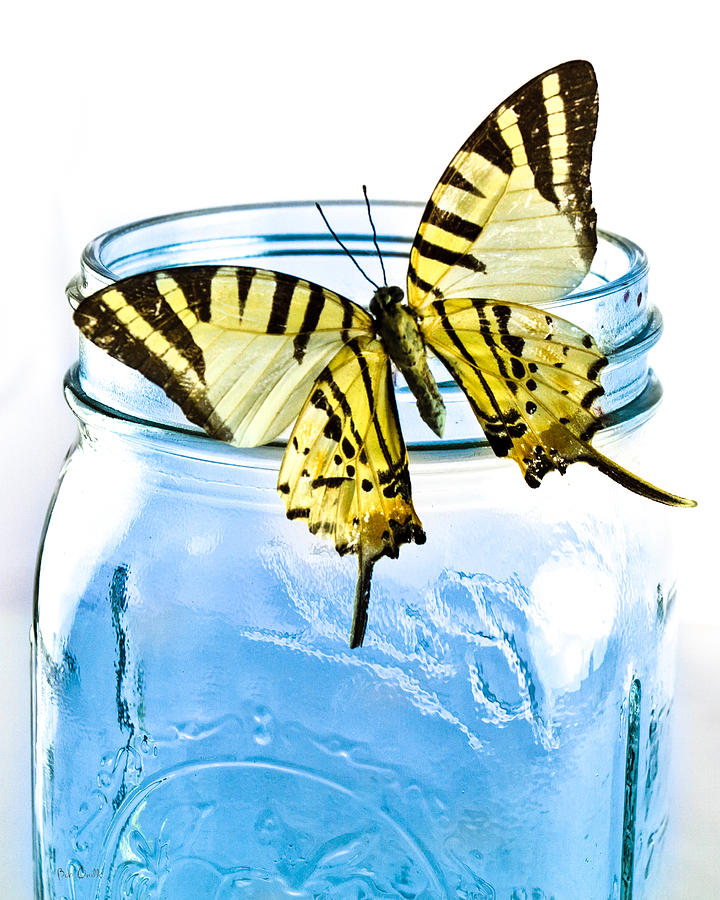 Nature Photograph - Butterfly On A Blue Jar by Bob Orsillo