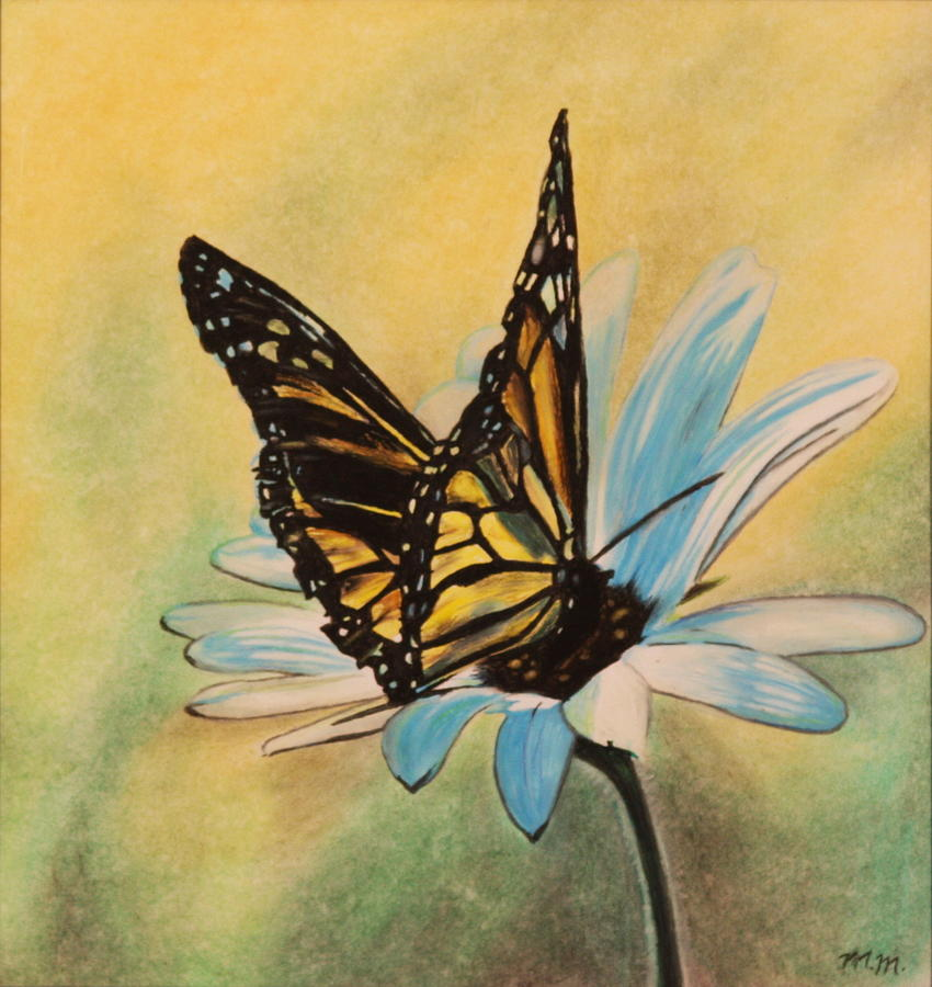 Butterfly On Flower Drawing by Michelle Miron-Rebbe