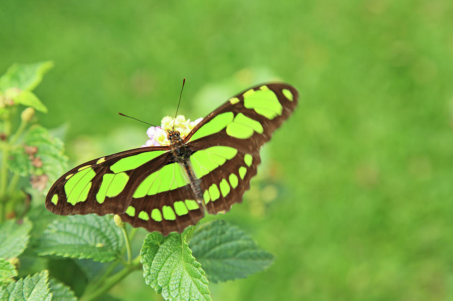 Butterfly On Flowers Photograph by Hiroshi Higuchi