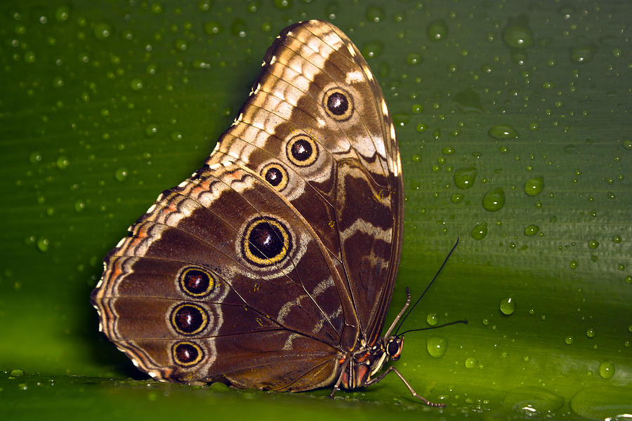 Nature Photograph - Butterfly On Green  by Sebastiaan Bosma