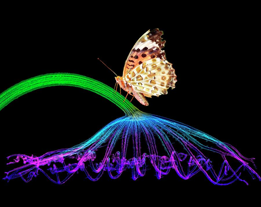 Nobody Photograph - Butterfly On Lotus Leaf by K H Fung/science Photo Library