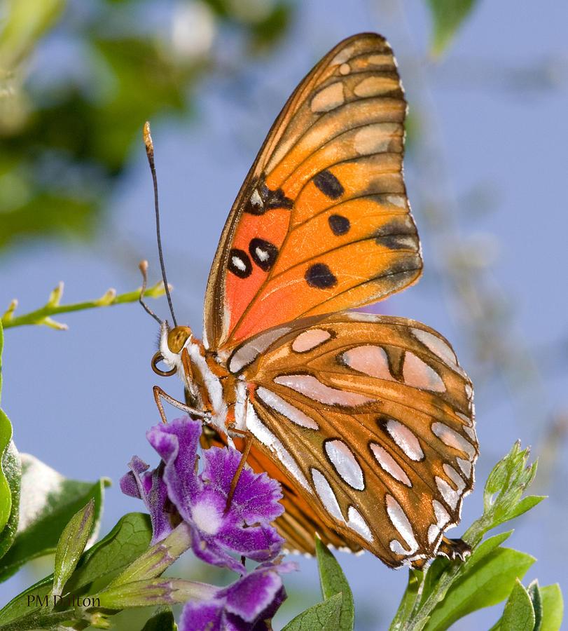 Butterfly Photograph - Butterfly by Paulette Moran Dalton
