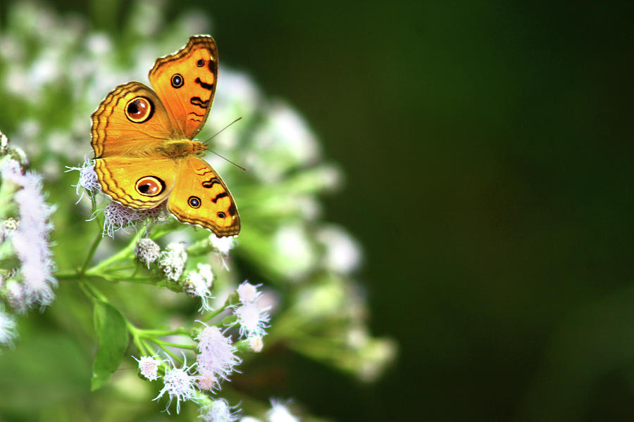 Butterfly Perching On A Wild Plant Photograph by Visage
