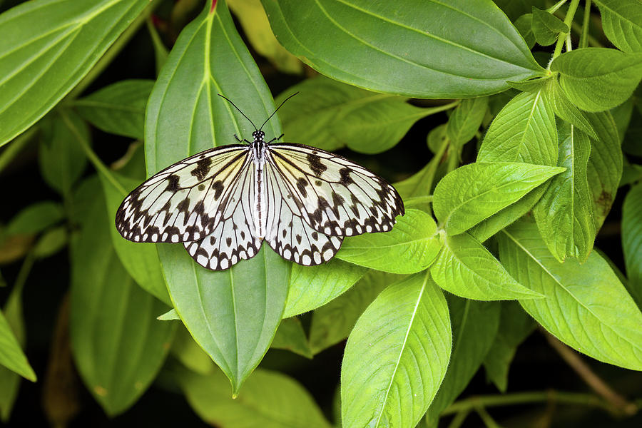 Horizontal Photograph - Butterfly Perching On Leaf In A Garden by Panoramic Images