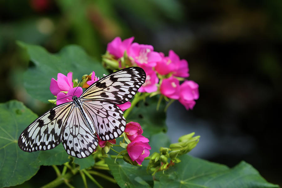 Horizontal Photograph - Butterfly Pollinating Flower by Panoramic Images