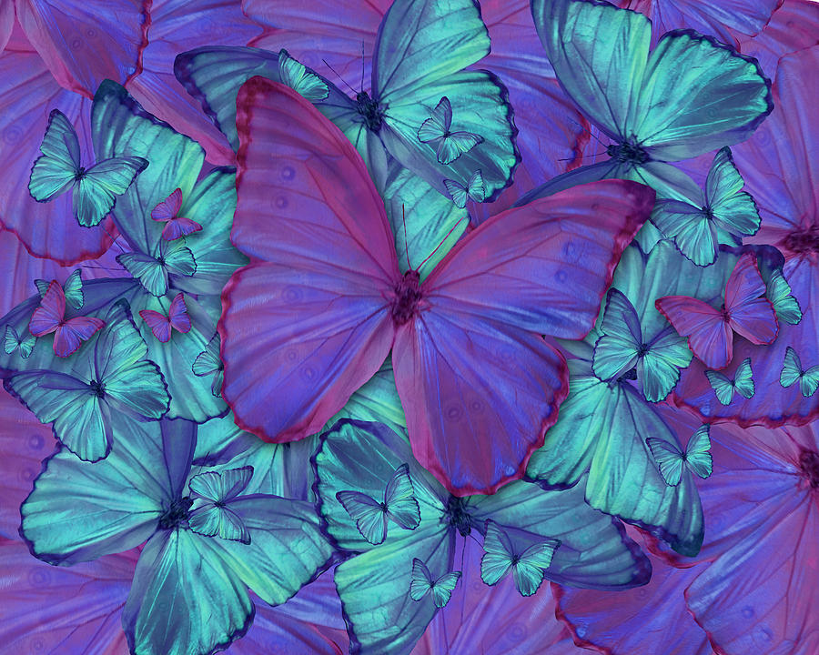Animals Photograph - Butterfly Radial Violetmorpheus by Alixandra Mullins