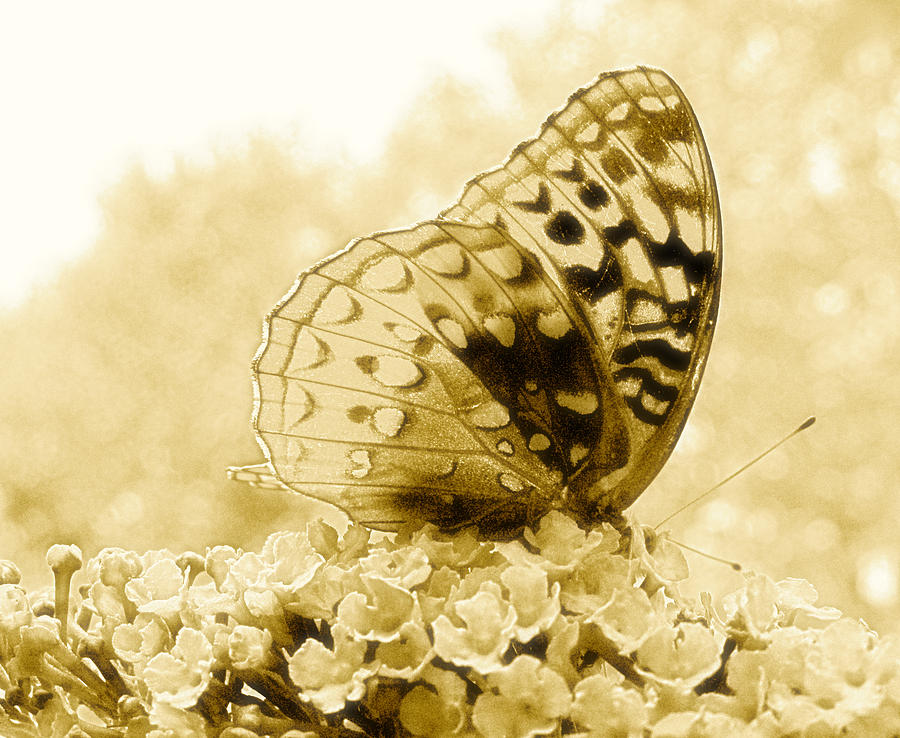 Butterfly Photograph - Butterfly by Randi Kuhne