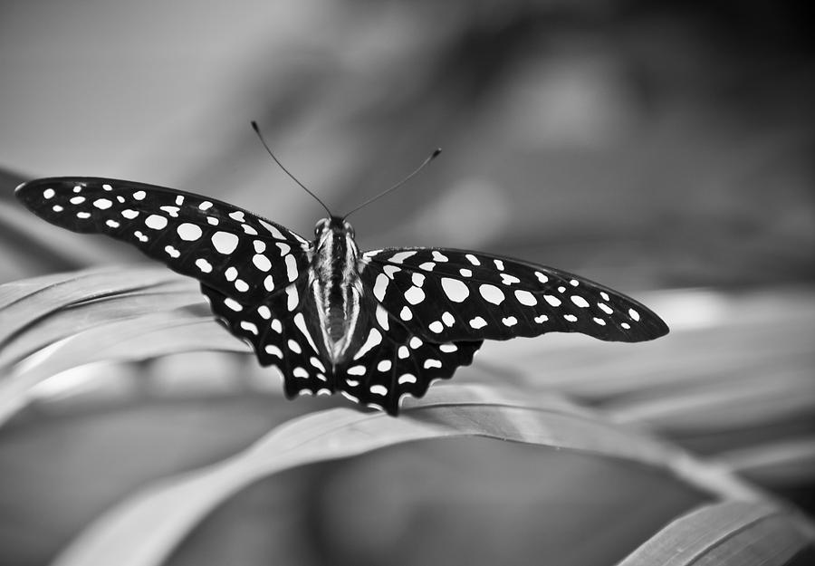Nature Photograph - Butterfly Resting by Ron White