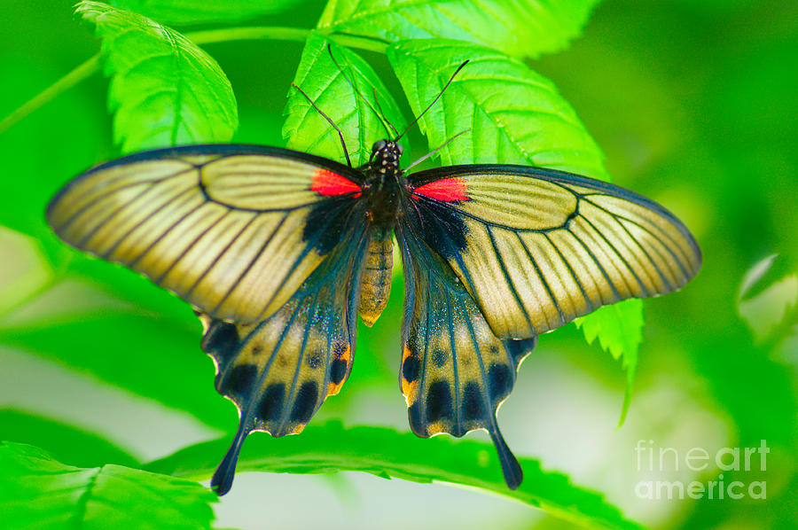 Butterfly Photograph - Butterfly Study #0064 by Floyd Menezes