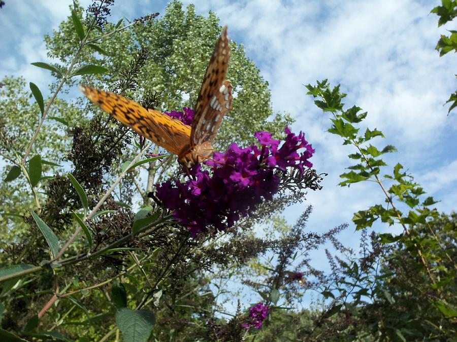 Butterfly Photograph by Susan Sidorski