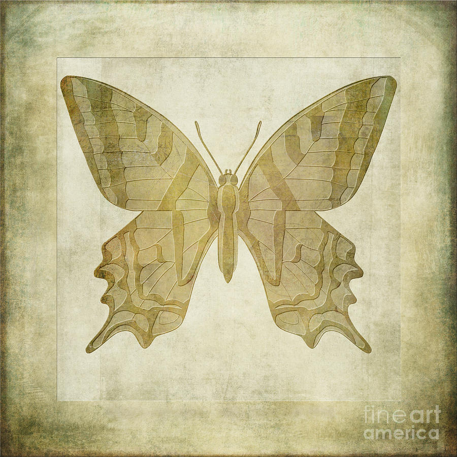 Animals Digital Art - Butterfly Textures by John Edwards