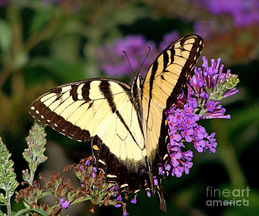 Gardens Photograph - Butterfly by Timothy Clinch