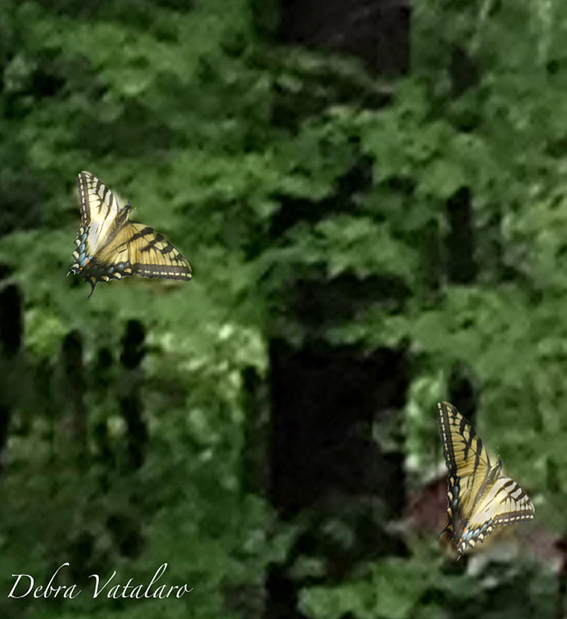 Dance With Me Photograph - Butterfly Waltz by Debra     Vatalaro