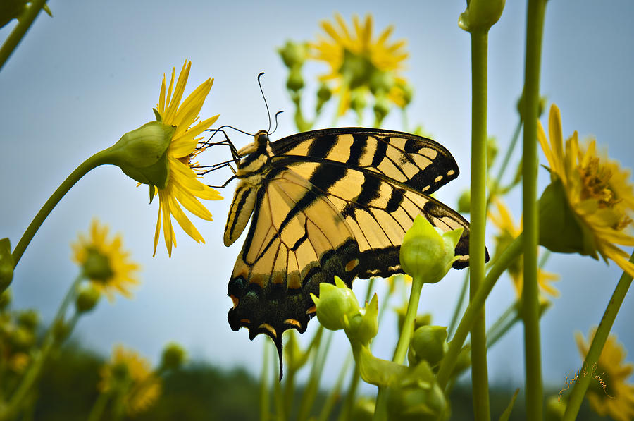 Butterfly Photograph by Williams-Cairns Photography LLC