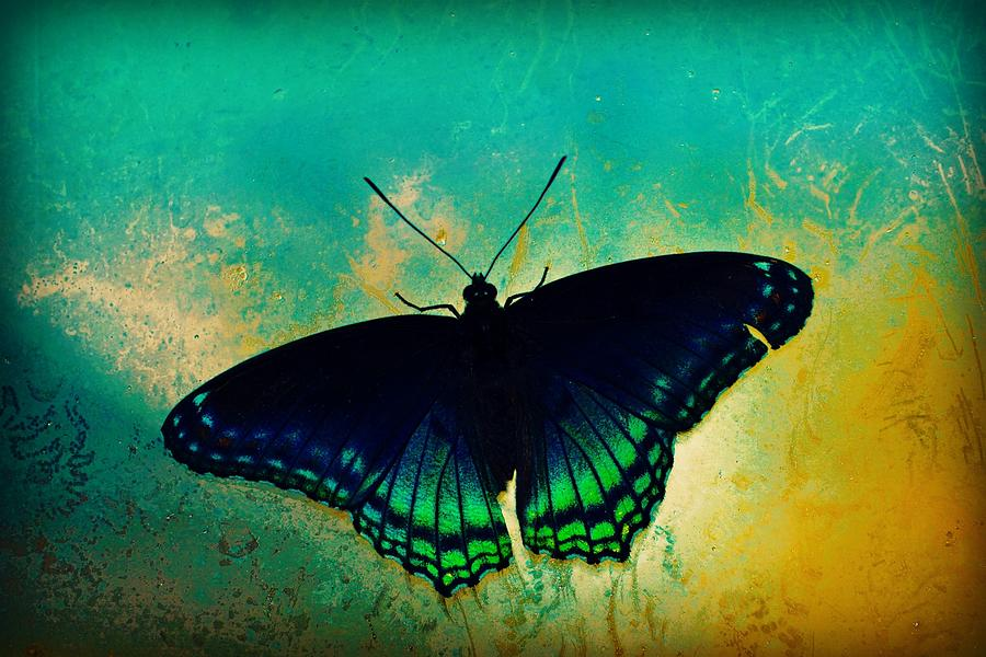 Nature Photograph - Butterfly Window by Alicia Romano