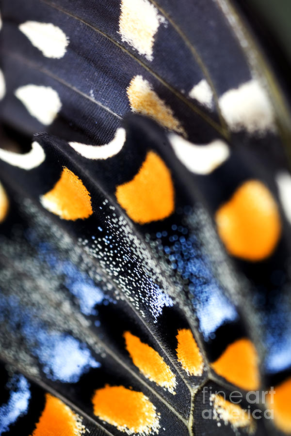 Colorful Photograph - Butterfly Wings by Iris Richardson