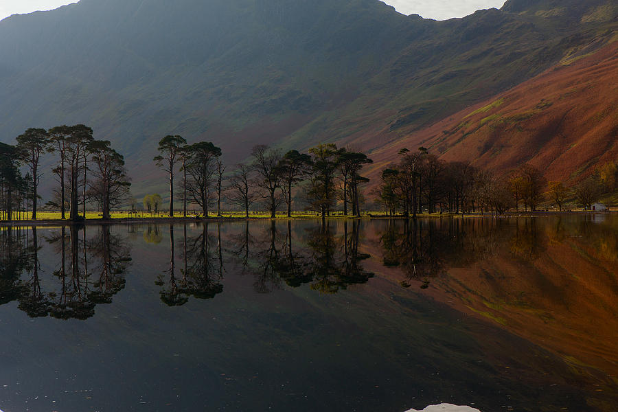 Buttermere Pines by Nick Atkin
