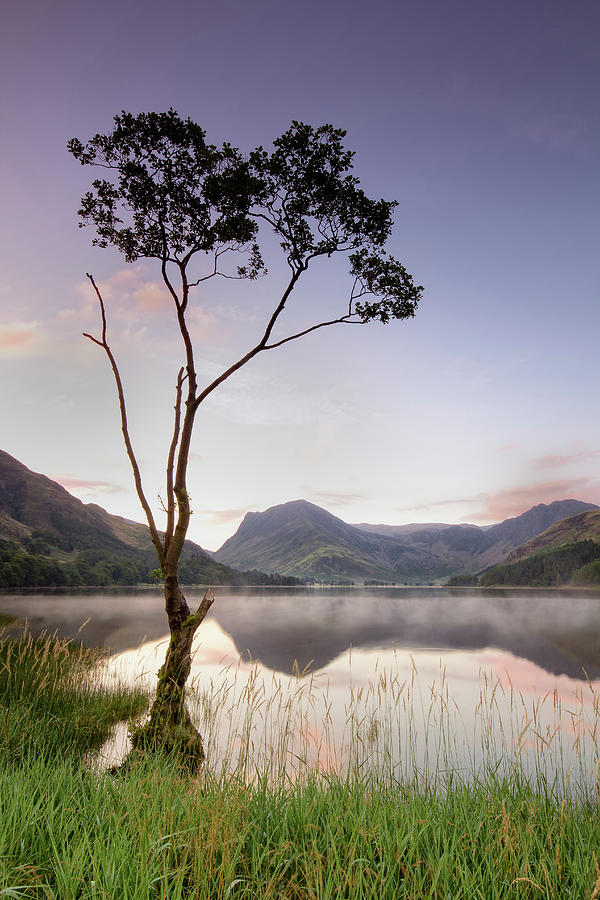 Buttermere Tree Photograph by Phil Buckle