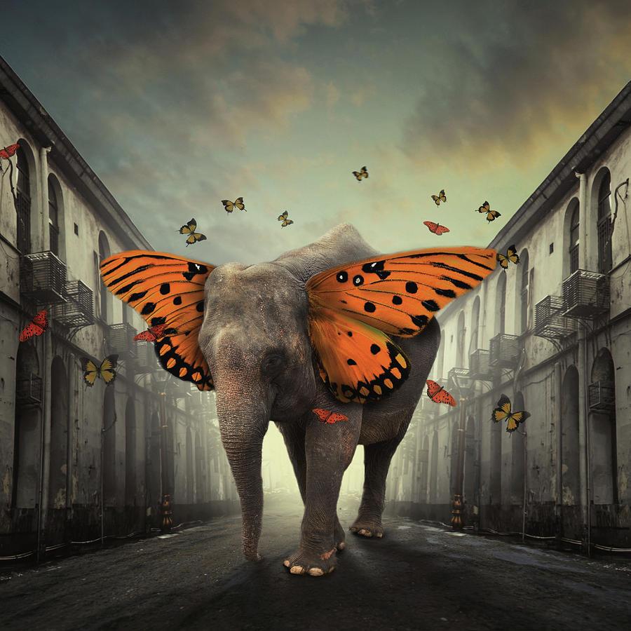 Creative Edit Photograph - Butterphant by Hardibudi