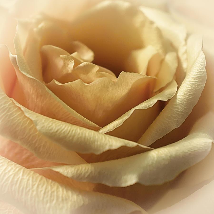 Floral Photograph - Butterscotch Sundae by Darlene Kwiatkowski