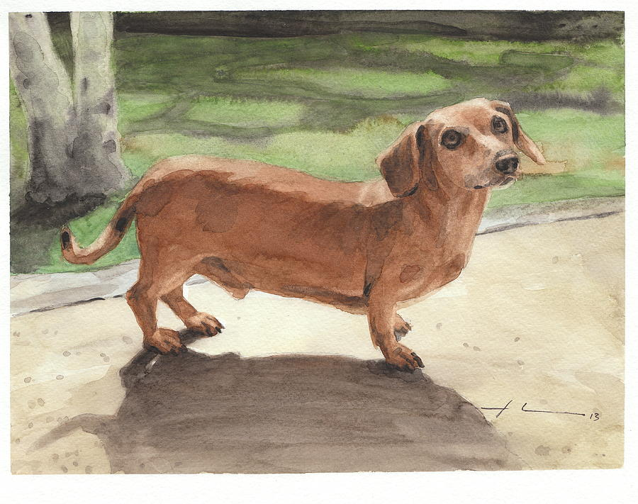 Buzz The Dachshund Watercolor Portrait Drawing by Mike Theuer