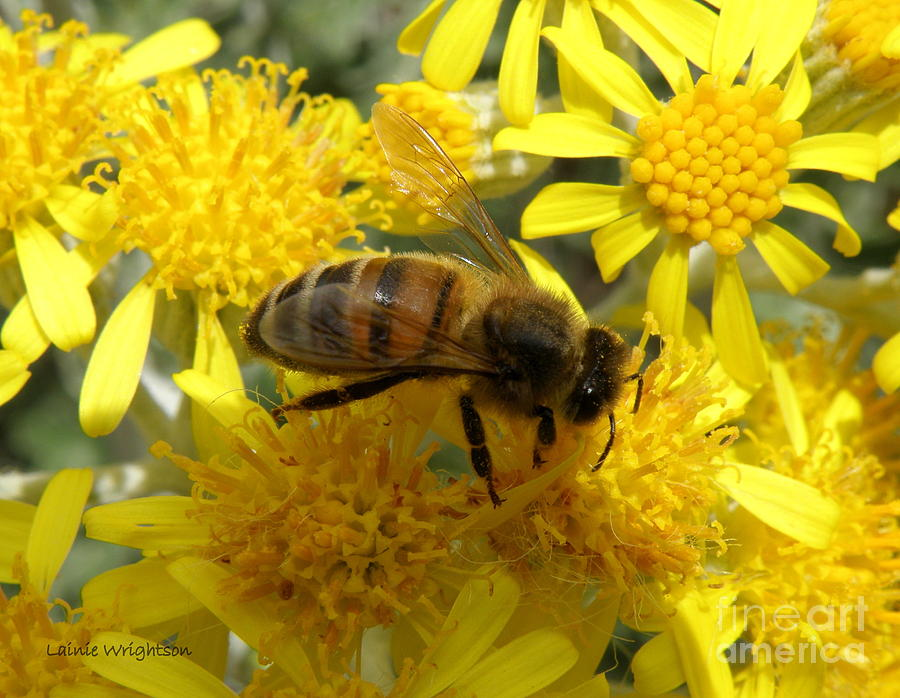 Bee Photograph - Buzzzzzy by Lainie Wrightson