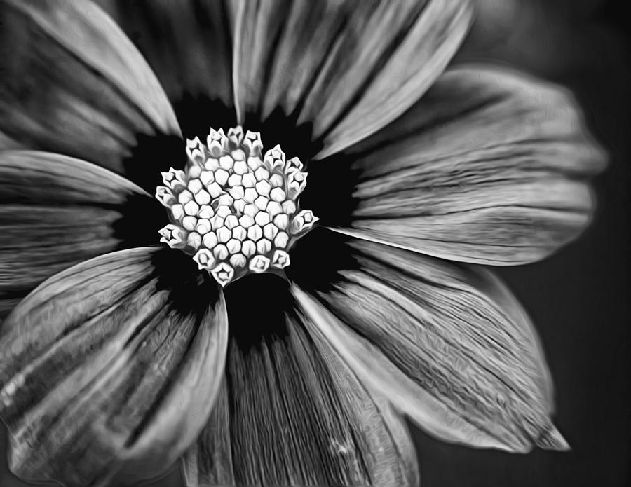 Bw Flower Art Photograph by Tammy Smith