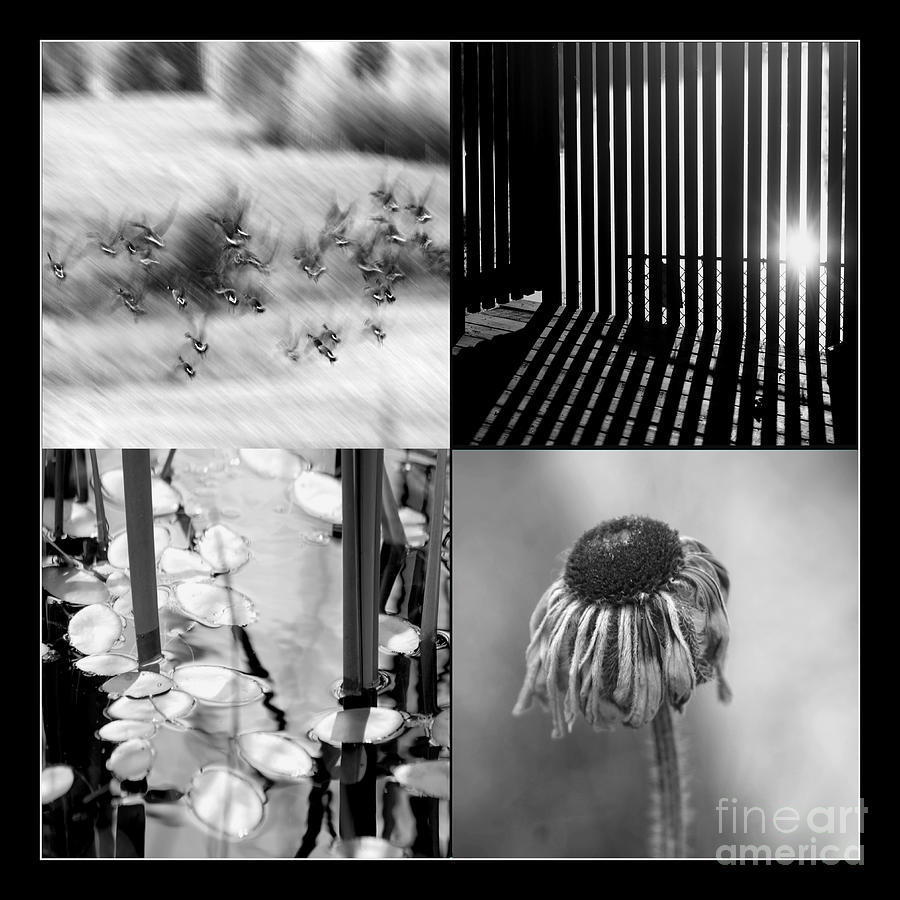 Bw Photograph - Bw Montage 01 by Aimelle