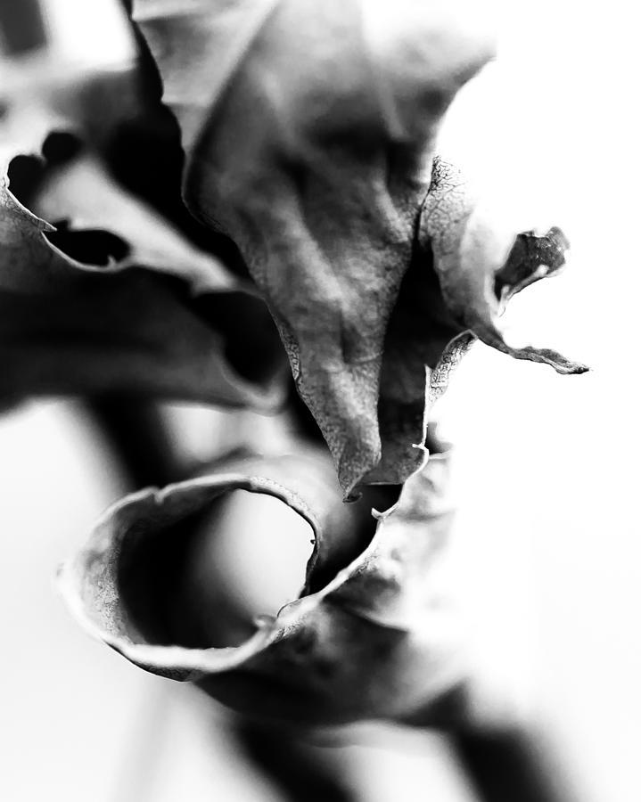 Abstract Photograph - Bw Mood Study 1 by Jakub Sisak