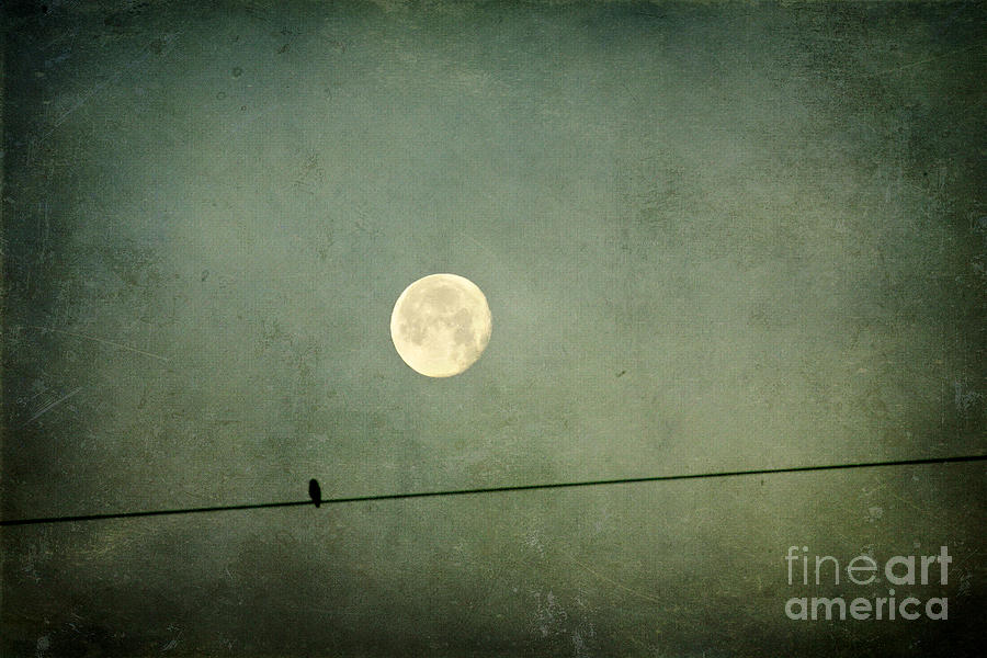 Moon Photograph - By The Light Of The Moon by Joan McCool