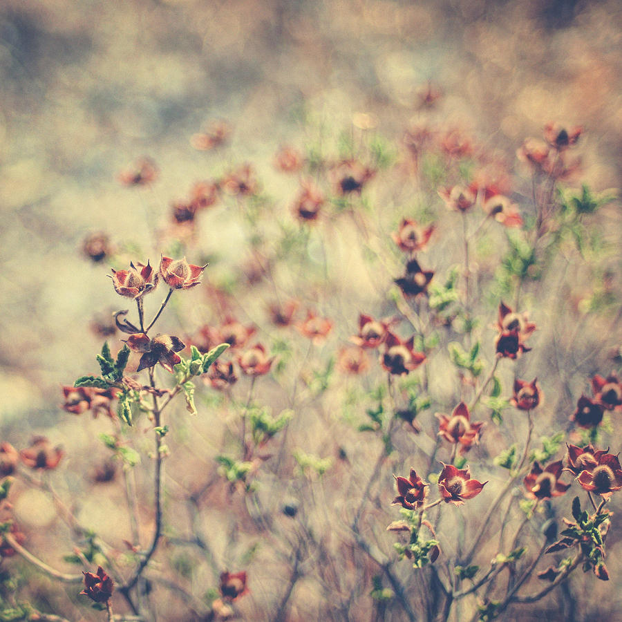 Plant Photograph - By Your Side by Taylan Apukovska
