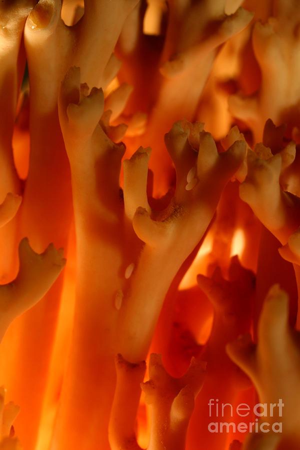 Mushroom Photograph - C Ribet Mushroom And Fungi Art Coral by C Ribet