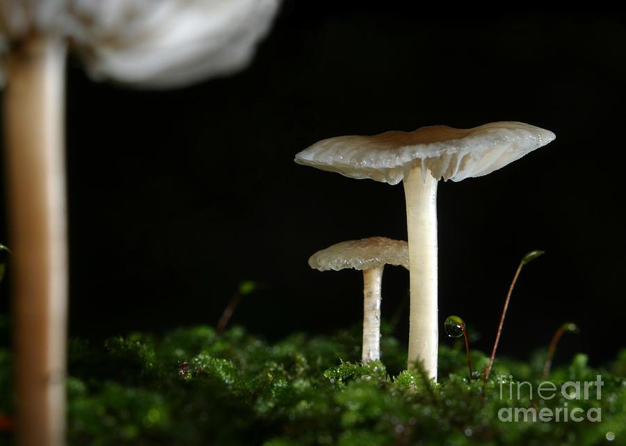 Mushroom Photograph - C Ribet Mushroom And Fungi Art Pearl by C Ribet