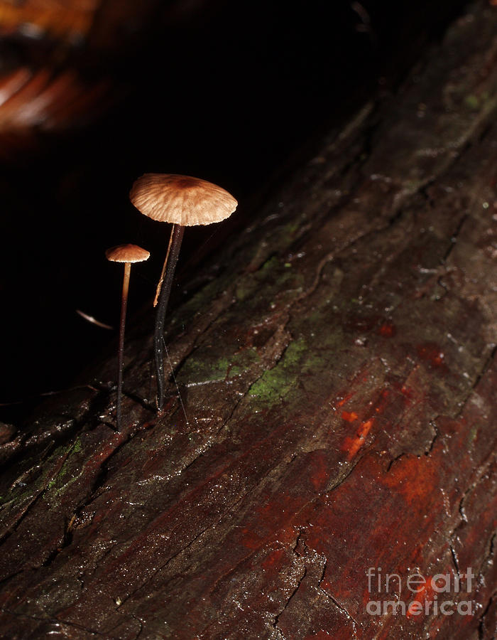 Mushroom Photograph - C Ribet Mushroom And Fungi Art The Sage by C Ribet